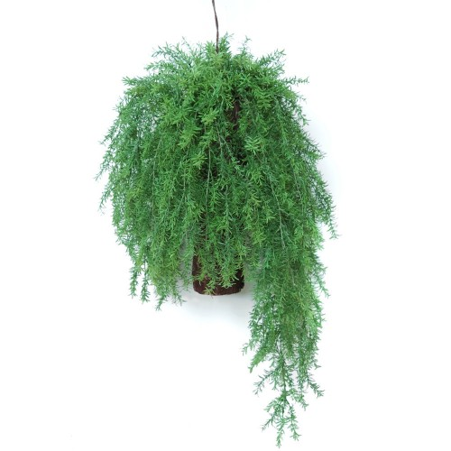 Planta semi-artificiala Ila, Asparagus Country Hanging - 80 cm