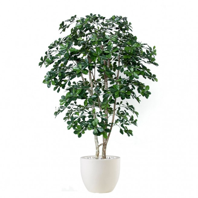 Planta semi-artificiala Ila, Buxifolia Natural Style Green - 180 cm