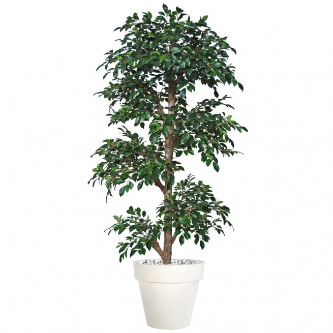 Planta semi-artificiala Ila, Ficus Retusa Multistep Green - 180 cm