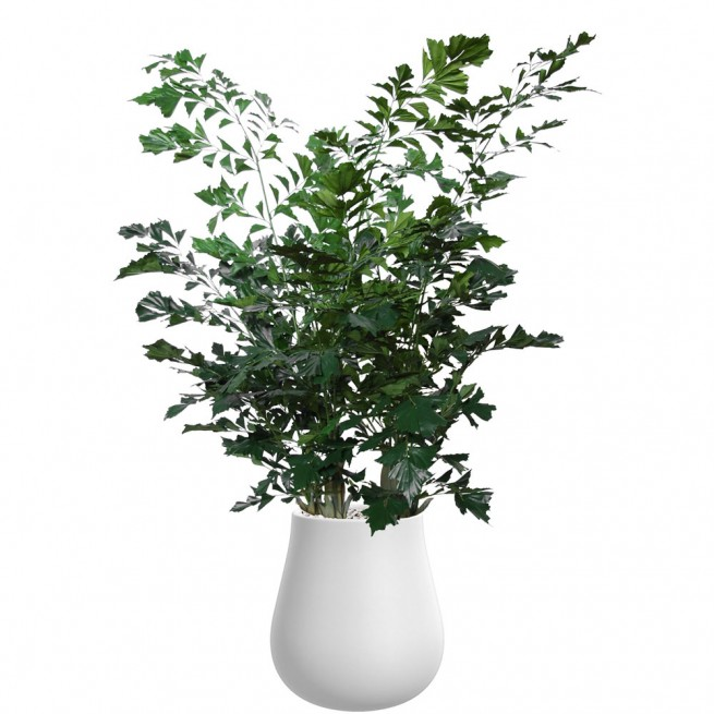 Planta semi-artificiala Ila, Fishtail Lux Green - 260 cm