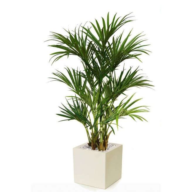 Planta semi-artificiala Ila, Kentia Lux Green - 180 cm