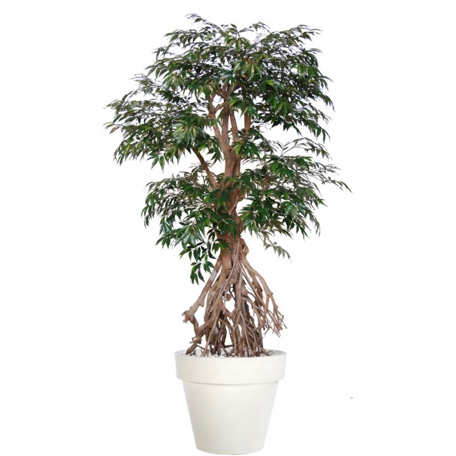 Planta semi-artificiala Ila, Myrsifolia Root Green - 220 cm