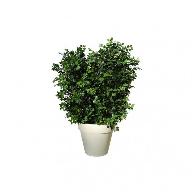Planta semi-artificiala Ila, Ficus Ginseng UVR Boschetto Green - 170 cm