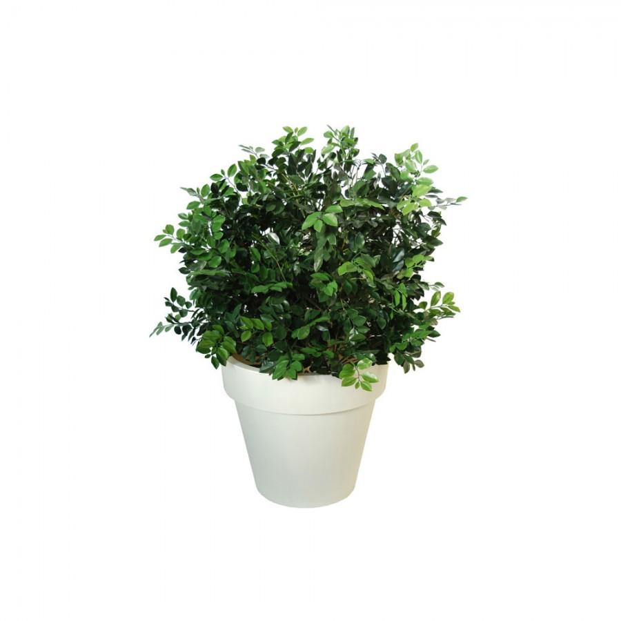 Planta semi-artificiala Ila, Ficus Ginseng UVR Buch Lux Green - 130 cm