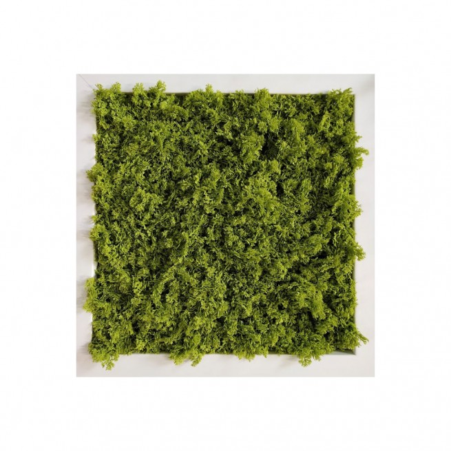 Planta semi-artificiala Ila, Vertical Garden Lichene (no frame)