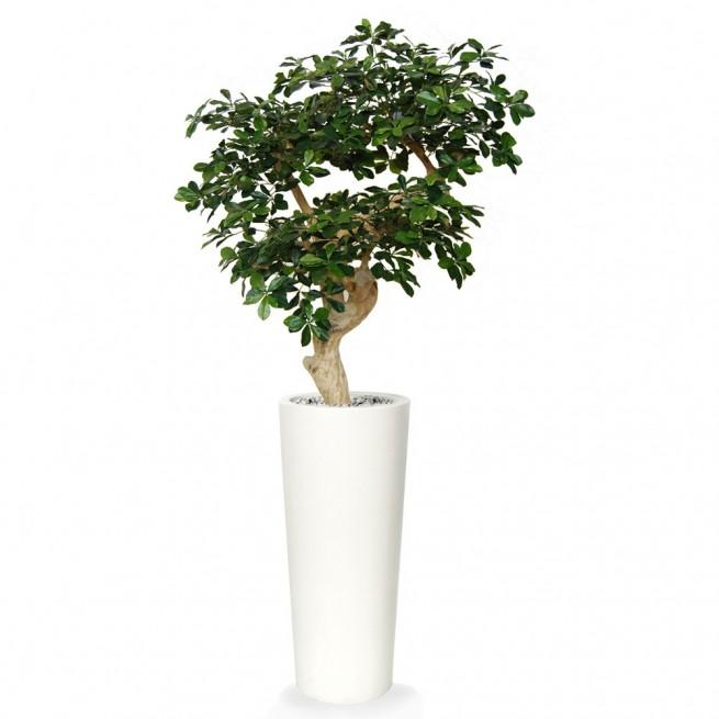 Planta semi-artificiala Ila, Buxifolia Crown Green - 150 cm