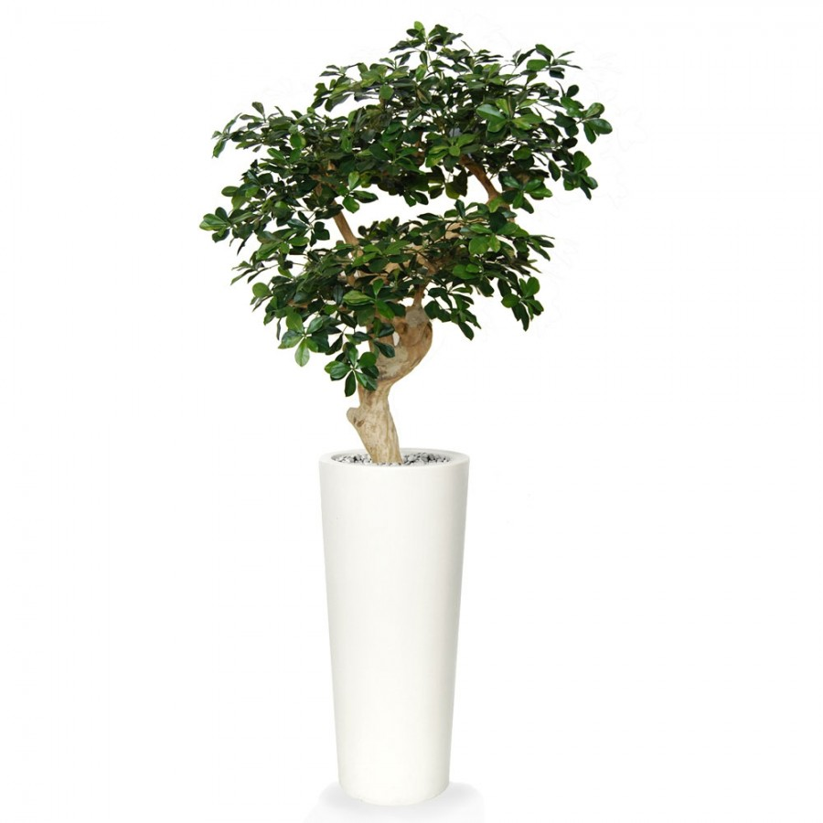 Planta semi-artificiala Ila, Buxifolia Crown Green - 150 cm