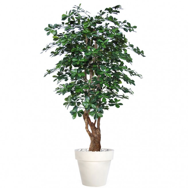 Planta semi-artificiala Ila, Buxifolia Malabar Green - 180 cm