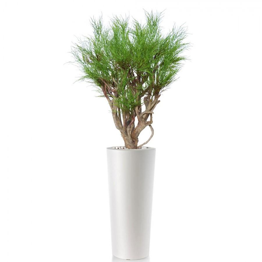 Planta semi-artificiala Ila, Coral Plant Green - 120 cm