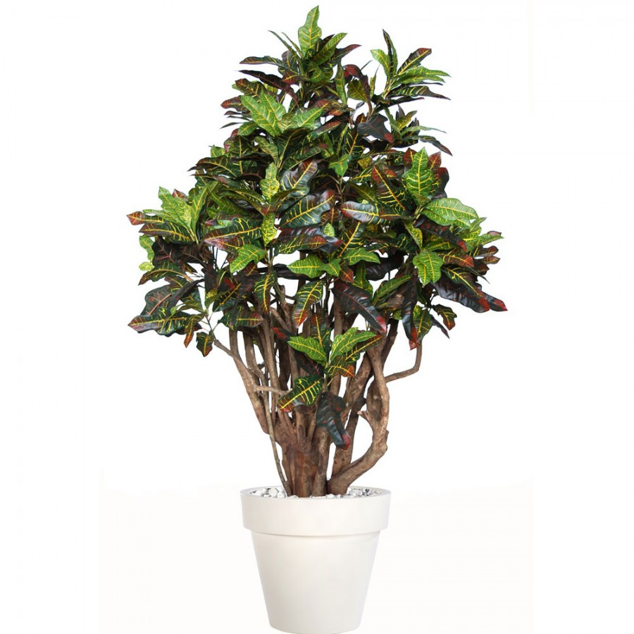 Planta semi-artificiala Ila, Croton Robusta Multicolor - 170 cm