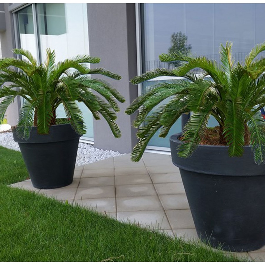 Planta semi-artificiala Ila, Cycas Palm Green - 160 cm