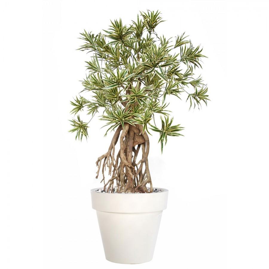 Planta semi-artificiala Ila, Dracaena Reflexa Everglades Varieg - 160 cm