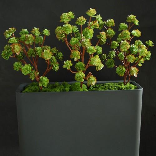 Planta semi-artificiala Ila, Echeveria Fence 1m - 130 cm