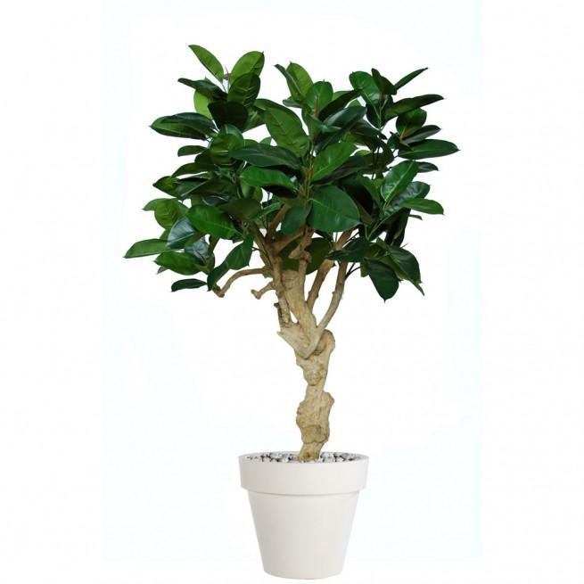 Planta semi-artificiala Ila, Ficus Elastica Crown - 180 cm
