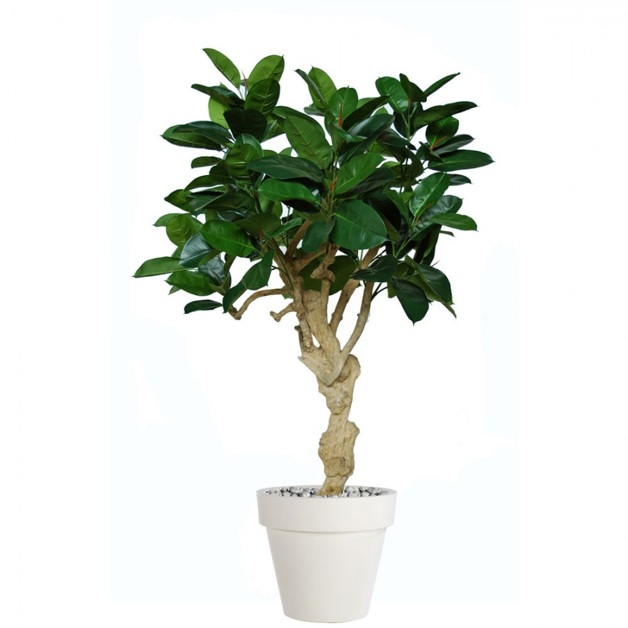 Planta semi-artificiala Ila, Ficus Elastica Crown - 180 cm