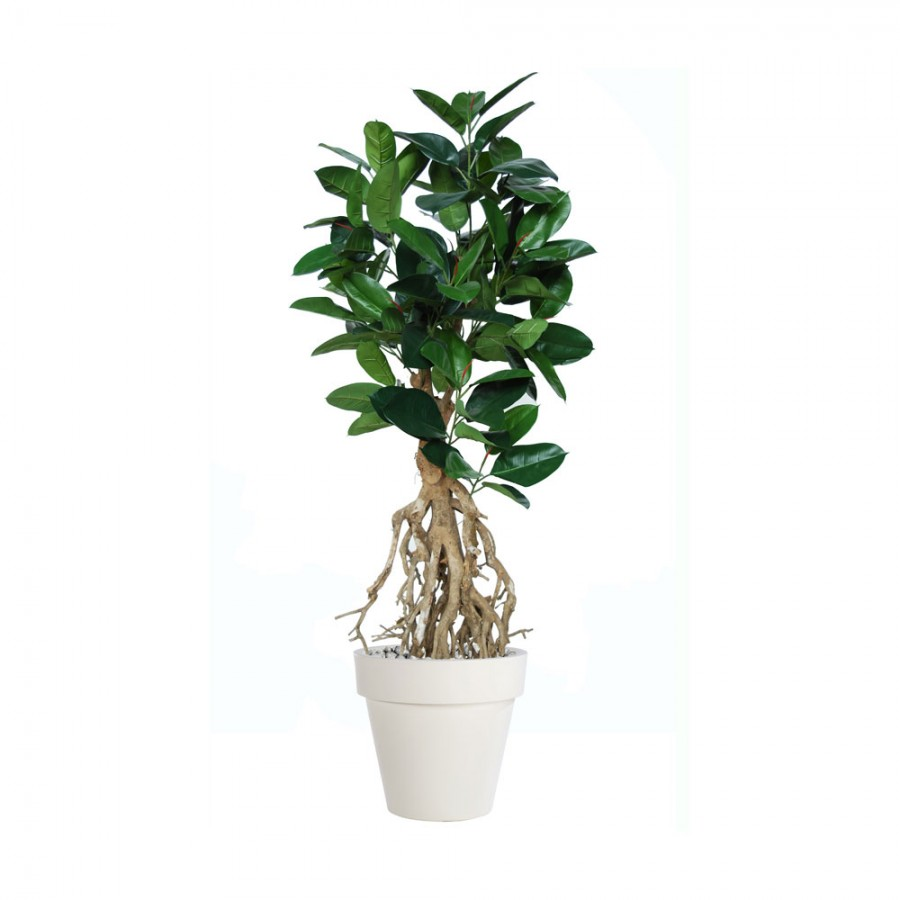 Planta semi-artificiala Ila, Ficus Elastica Root Green - 160 cm