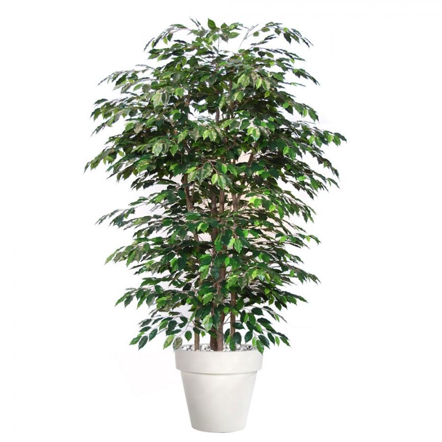 Planta semi-artificiala Ila, Ficus Exotica Boschetto - 220 cm