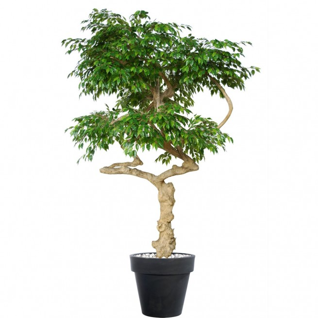 Planta semi-artificiala Ila, Ficus Golden Nidra Lt Green - 250 cm