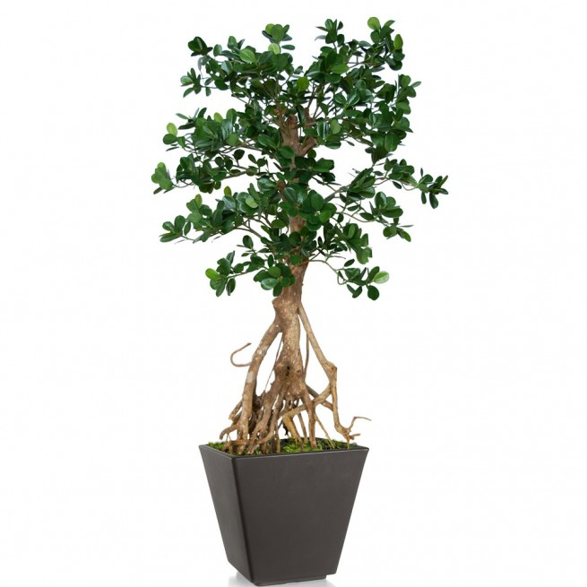 Planta semi-artificiala Ila, Ficus Retusa Root Mini Green - 150 cm