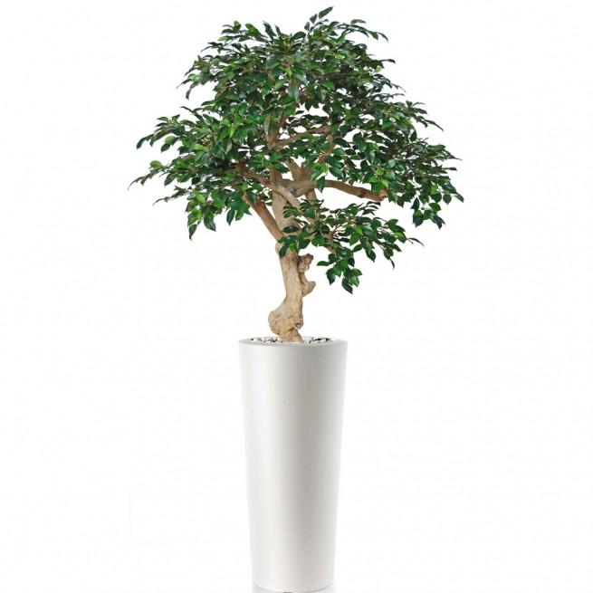 Planta semi-artificiala Ila, Ficus Retusa Crown Green - 200 cm