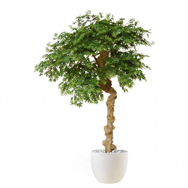 Planta semi-artificiala Ila, Maple Nidra - 250 cm