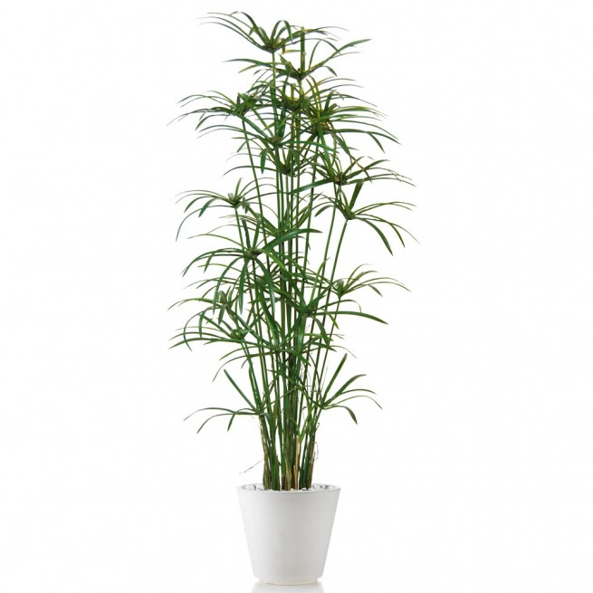 Planta semi-artificiala Ila, Papyrus Royal Lux Green - 190 cm